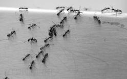 Las Hormigas 3