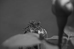 Serie Desnudando 13